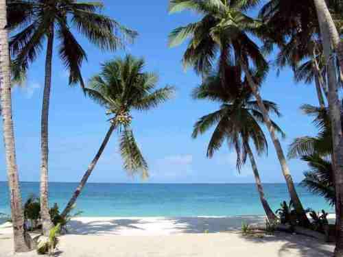 boracay_palm_trees1